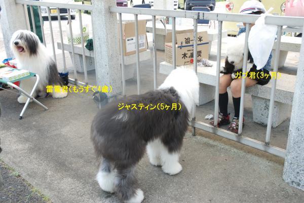 2012_0527_114103-DSC_0202_convert_20121013144533.jpg