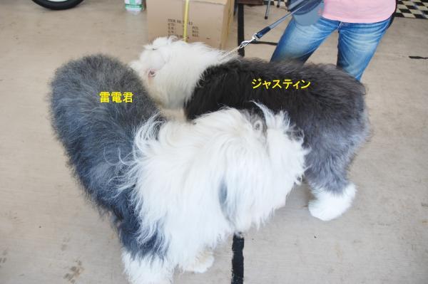 2012_0722_155914-DSC_0080_convert_20121013144736.jpg