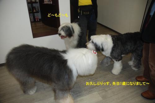 DSC_0079_convert_20121219180722.jpg