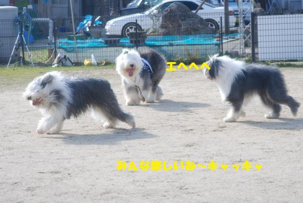 DSC_0079_convert_20130205173158.jpg