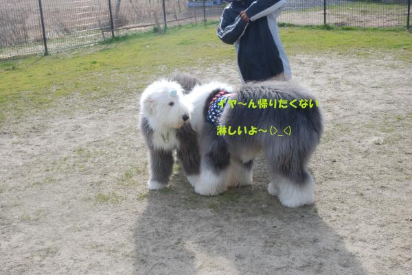 DSC_0135_convert_20130206155346.jpg