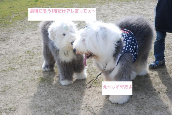 DSC_0138_convert_20130206155423.jpg