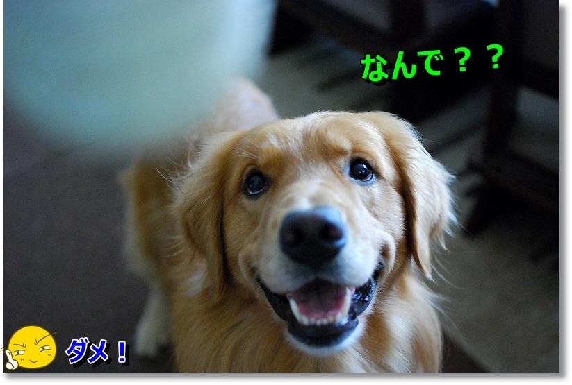 DSC_0117_20141128215839ecb.jpg