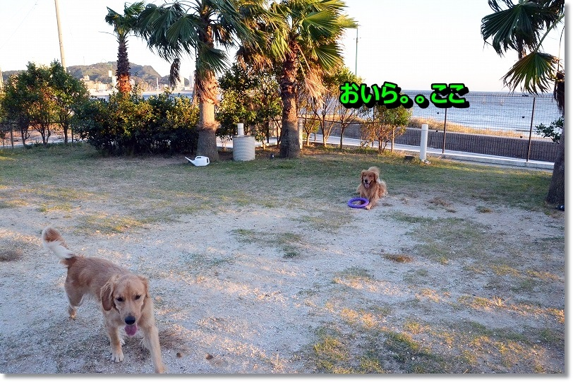 DSC_4248_20141213095222be0.jpg