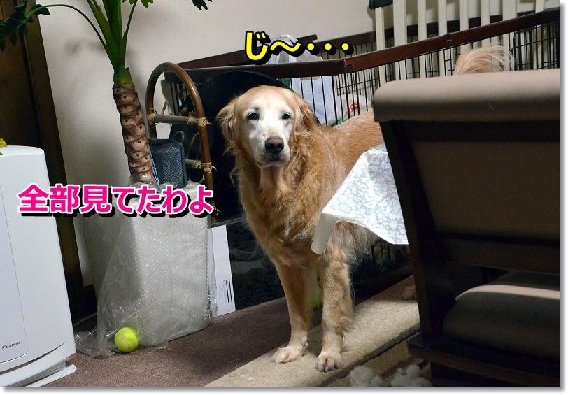 DSC_6700_201412140937231be.jpg