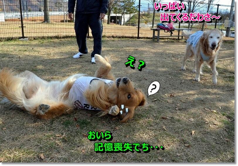 DSC_7204_201411300829301c9.jpg