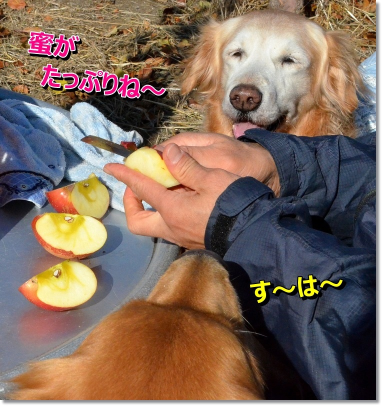 DSC_7506_201412052009412a1.jpg