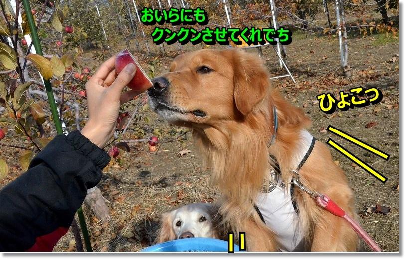 DSC_7511_2014120520094449b.jpg