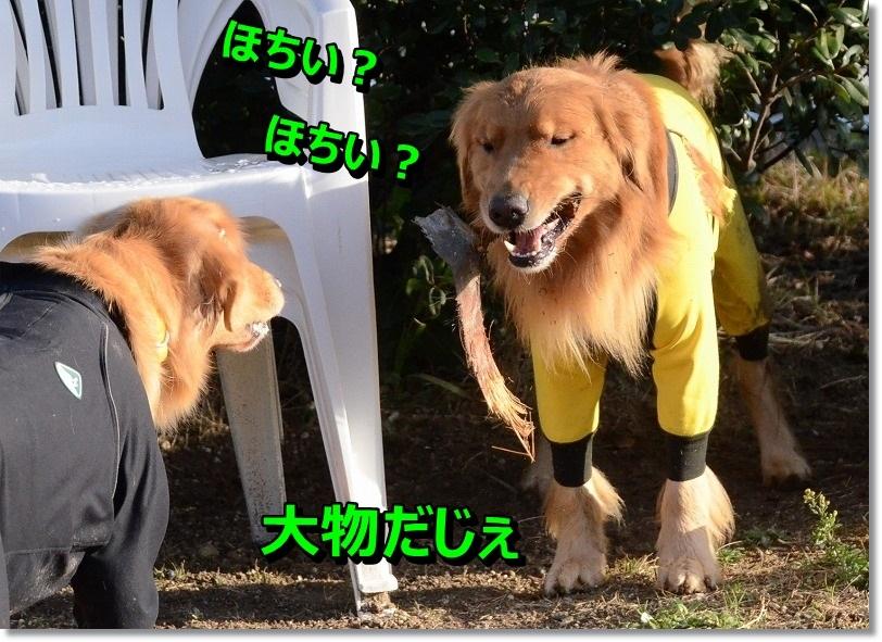 DSC_7759_20141210203600343.jpg