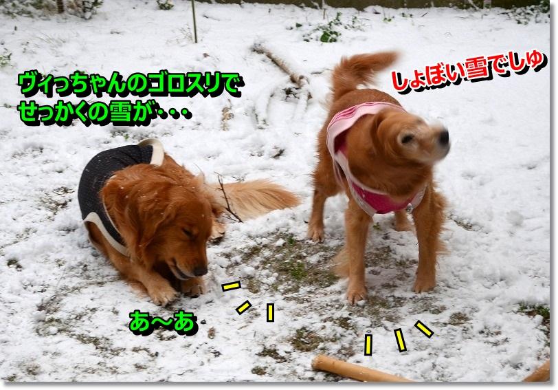 DSC_8338_20141218203403727.jpg