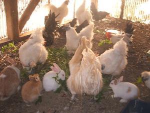 鶏20101902