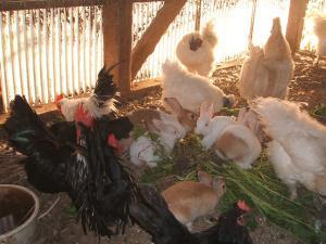 鶏20101909