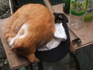 カラシロ御猫手03