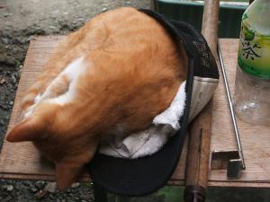 カラシロ御猫手01