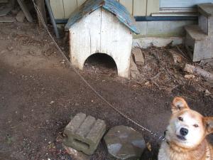 犬シッター21