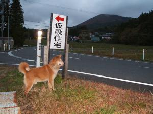 犬シッター05