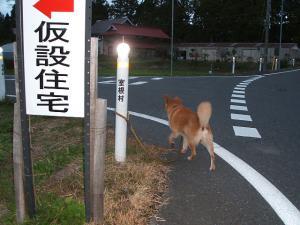 犬シッター04