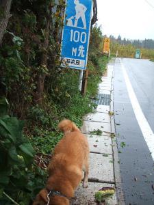 犬シッター15