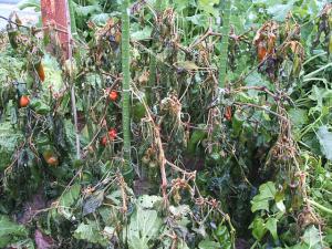 菜園20122704