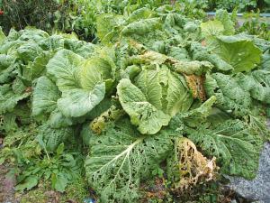 菜園20122702