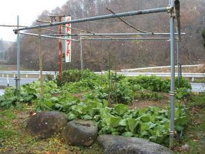 菜園20122709