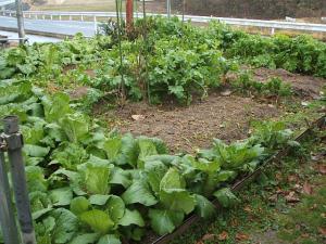 菜園20122708
