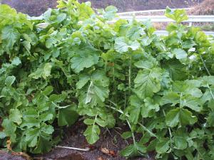 菜園20122707