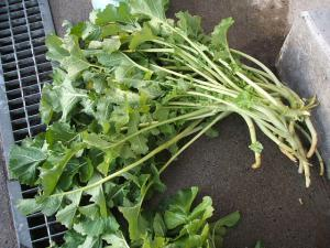 収穫a02