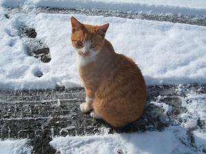 雪とカラ06