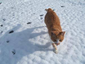 雪とカラ04