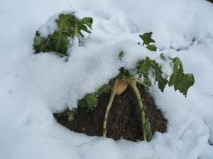 雪景色09