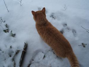 この辺では大雪です06