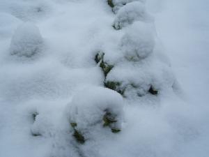 この辺では大雪です02