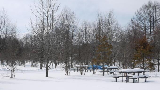 スイートグラス冬029