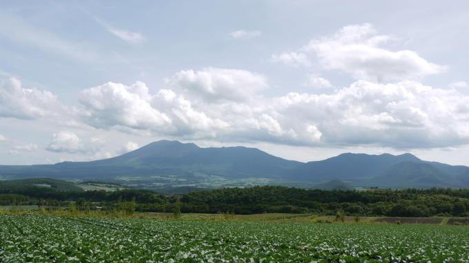 キャベツ畑03