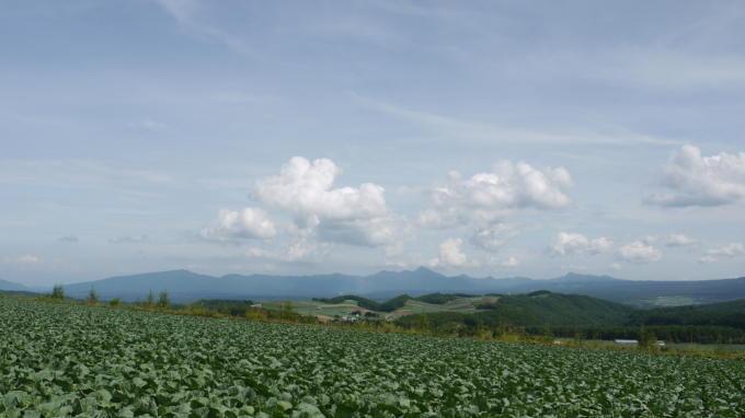 キャベツ畑02