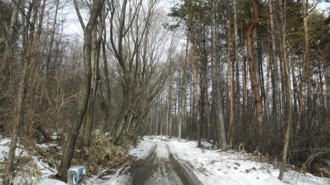 あさまの森-入り口04