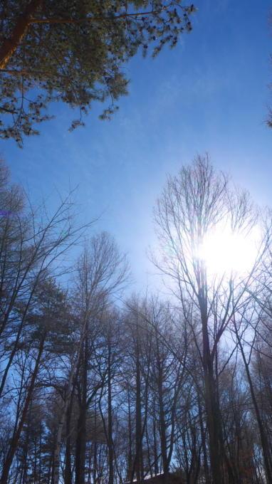 あさまの森-20130209朝の風景04
