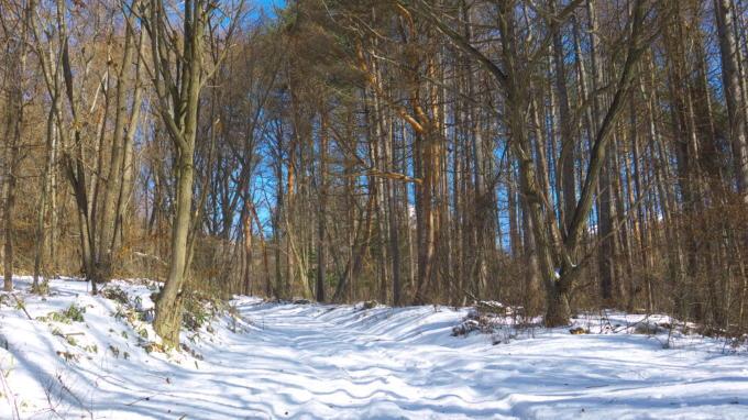 あさまの森-牧場への道01