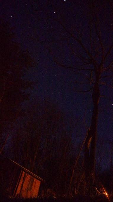 あさまの森-20130208夜09