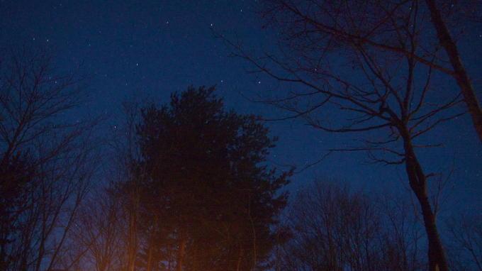 あさまの森-20130208夜11