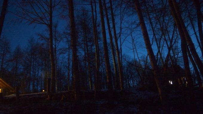 あさまの森-20130208夜12