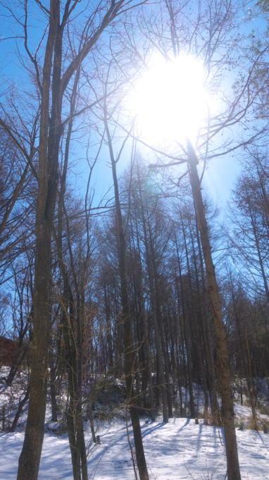 あさまの森-20120210朝10