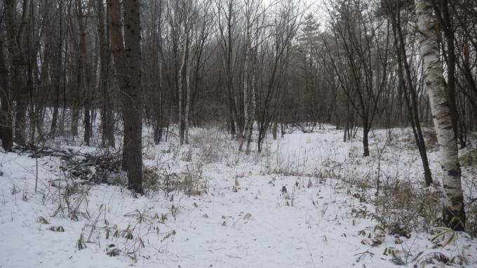 あさまの森-サイト07