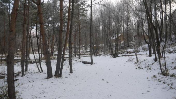 あさまの森-サイト08