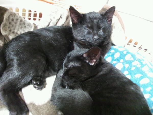 黒猫男子スヤスヤ中
