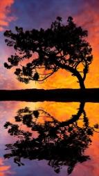 iTree-Sunset-Reflection.jpg