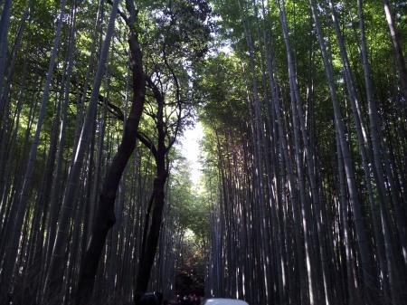 i2012-11-20 8.26.09竹林の道