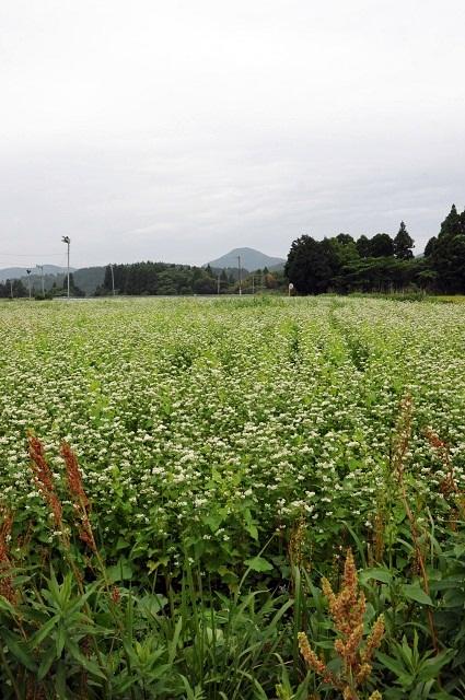 蕎麦畑6P