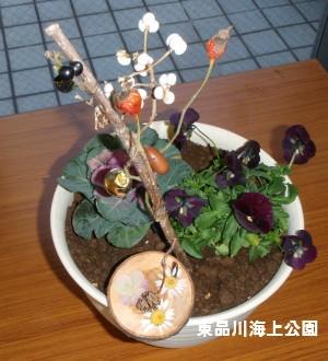 fuyu8_20121216160519.jpg